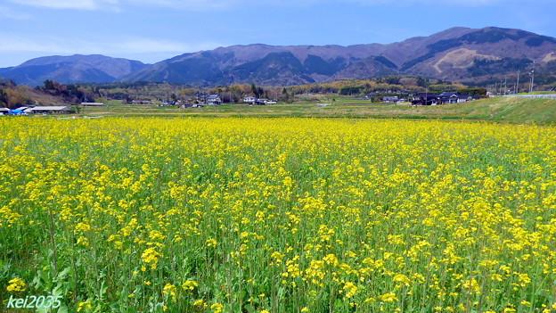那岐山と菜の花畑