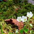 森林公園の花々