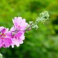 写真: 住心院の花々