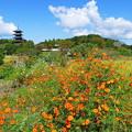 Photos: 吉備路の秋景色
