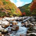 写真: 奥津溪の紅葉