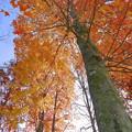 晩秋の風景