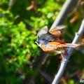 阿部池の野鳥(1)