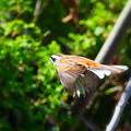 阿部池の野鳥(2)
