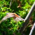 阿部池の野鳥(3)