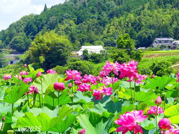 久米南「花はす公園」NO.9
