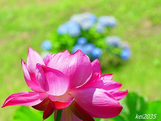 久米南「花はす公園」NO.11