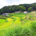 Photos: 棚田風景