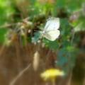 Photos: 蝶の舞NO.1