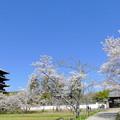 Photos: 吉備路の春NO.1