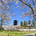 Photos: 吉備路の春NO.2