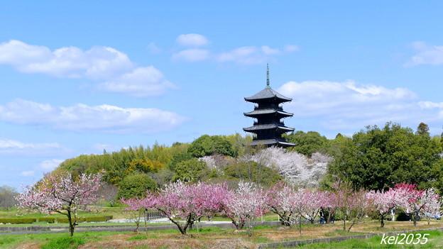 Photos: 吉備路の春NO.3