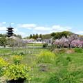 Photos: 吉備路の春NO.4