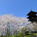 Photos: 吉備路の春NO.6