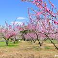 Photos: 吉備路の春NO.7