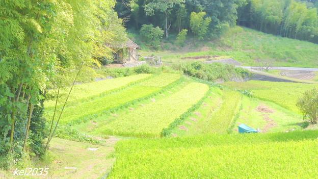 Photos: 里山の秋NO.11