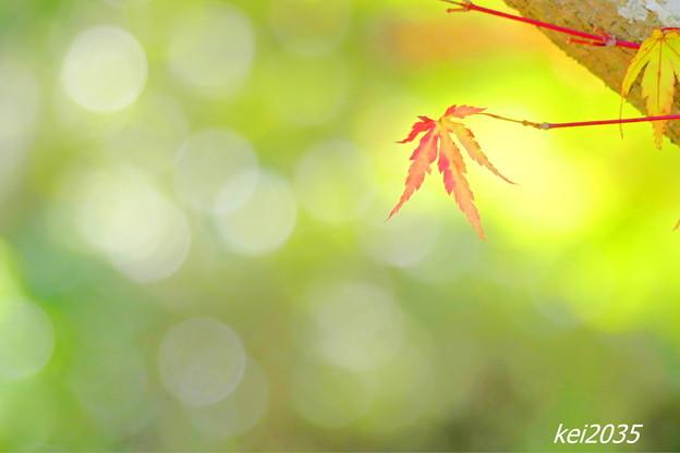 Photos: 里山の秋NO.12