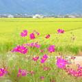 Photos: 田園風景NO.1