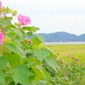 田園風景NO.2