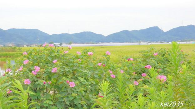 Photos: 田園風景NO.3