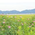 田園風景NO.3