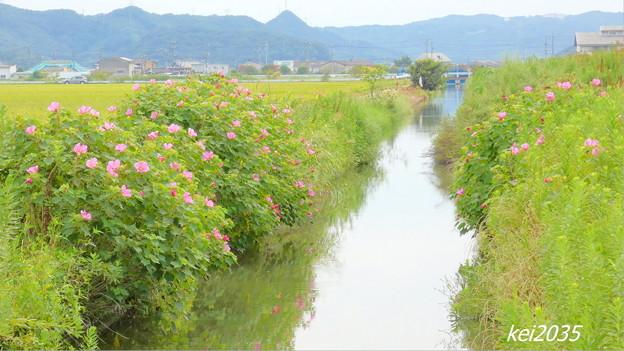 Photos: 田園風景NO.4