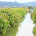 田園風景NO.4