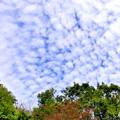 うろこ雲??