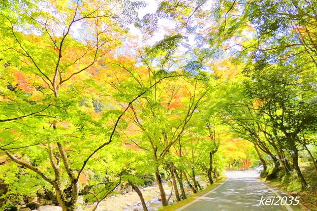 豪渓の紅葉NO.5