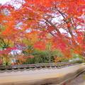 龍泉寺の紅葉NO.1