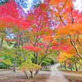 龍泉寺の紅葉NO.4