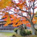 龍泉寺の紅葉NO.6