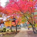 Photos: 龍泉寺の紅葉NO.7