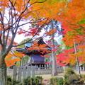 龍泉寺の紅葉NO.10
