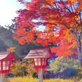龍泉寺の紅葉NO.12