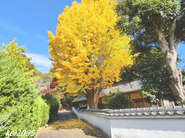 Photos: 赤磐 千光寺の黄葉NO.1