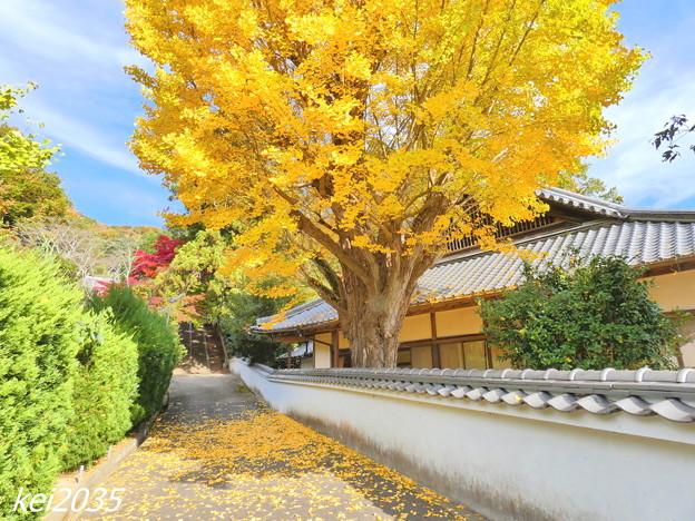Photos: 赤磐 千光寺の黄葉NO.2