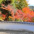 赤磐 千光寺の紅葉NO.3