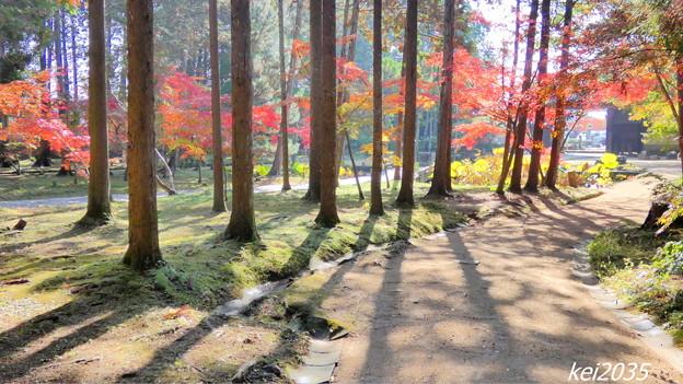 Photos: 曹源寺の紅葉NO.1