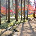 曹源寺の紅葉NO.1