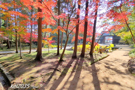 曹源寺の紅葉NO.2