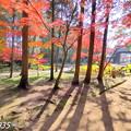 Photos: 曹源寺の紅葉NO.2
