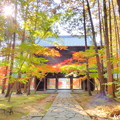 曹源寺の紅葉NO.3