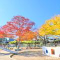 Photos: 自宅近くの公園の紅葉