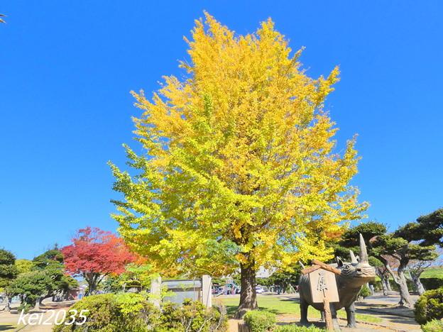 自宅近くの公園の黄葉