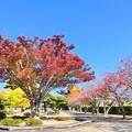 自宅近くの公園の紅葉