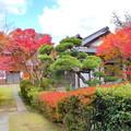 Photos: 吉備寺の紅葉NO.1