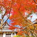 吉備寺の紅葉NO.4