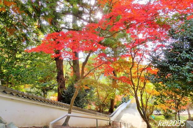 Photos: 赤磐 千光寺の紅葉NO.5