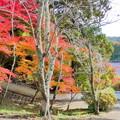 Photos: 赤磐 千光寺の紅葉NO.6